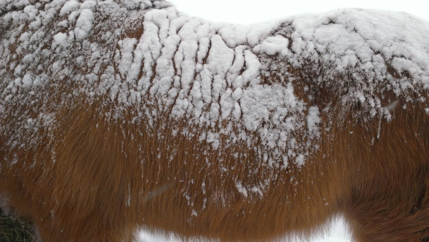 Snow and horse Canon