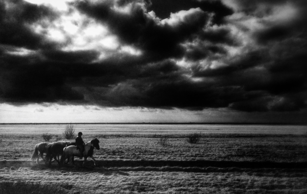 horses from the road - iPhone