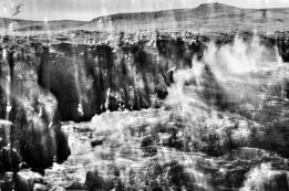 Gulls, Grimsey - Leica