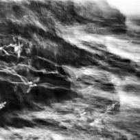 gulls - leica